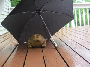 Darlusz the frog endures Sunday's rain on my back deck.
