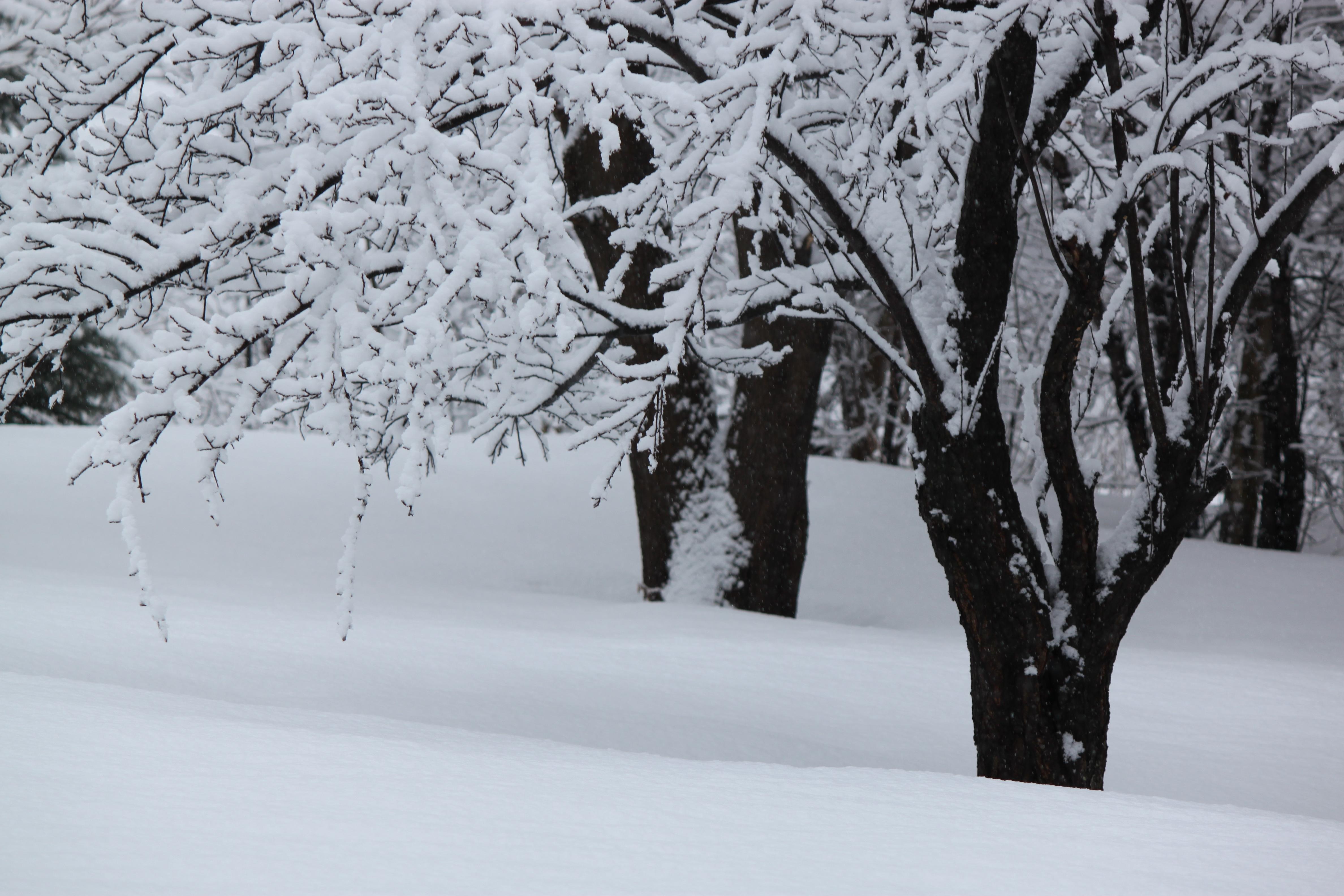 Wonderful Wallpaper Home Screen Snow - 1jpg  HD_628633.jpg